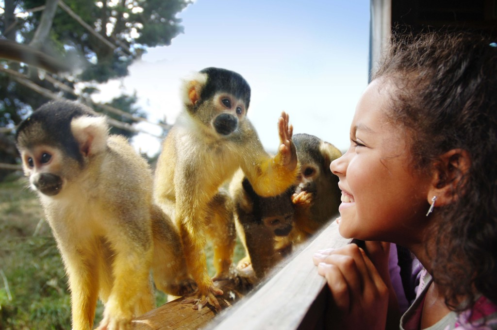 squirrel-monkey-11